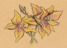 Vintage sepia yellow lilies sketch craft paper isolated Stock Image