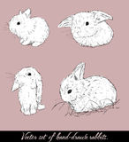 Vintage set with cute rabbits. Vector illustration EPS8 Stock Image