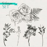 Vintage set of roses, branches and grass Royalty Free Stock Photos