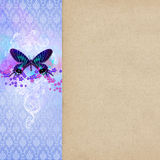 Vintage shabby chic background. With butterfly stock photo
