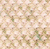 Vintage shabby pink chic rose background texture Royalty Free Stock Image