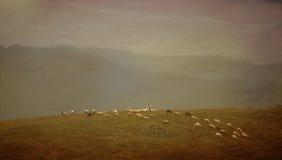 Vintage sheep background Stock Photos
