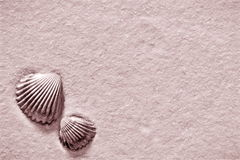 Vintage shells Royalty Free Stock Photography