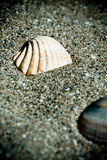 Vintage shells on the sand Stock Image