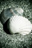 Vintage shells on the sand Stock Photography