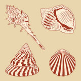 Vintage Shells Set. Stock Photography