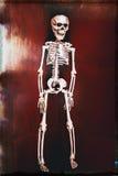 Vintage Skeleton on Red Stock Photos