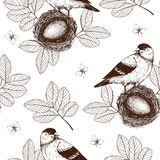 Vintage sketch background with birds Stock Image