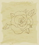 Vintage sketch of beautiful rose Royalty Free Stock Photo