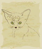 Vintage sketch of cute cat Stock Images