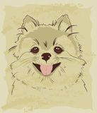 Vintage sketch of cute spitz dog Royalty Free Stock Photography