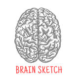 Vintage sketch of human brain for creative design Royalty Free Stock Image