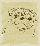 Vintage sketch of pug dog Stock Images