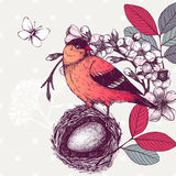 Vintage sketch of red bird in nest Royalty Free Stock Image