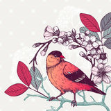 Vintage sketch of red bird Royalty Free Stock Image