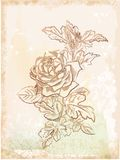 vintage sketch of  rose Stock Images
