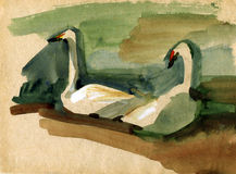 Vintage sketch of a swans. Vintage sketch of a birds swans Stock Photos