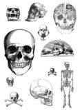 Vintage set of skulls clip art. Vintage skulls set of clip art royalty free illustration