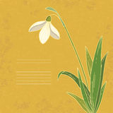 Vintage snowdrop card Stock Photos