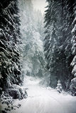 Vintage snowy fir trees Royalty Free Stock Photos