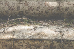 Vintage sofa and pine needles on it Royalty Free Stock Photography