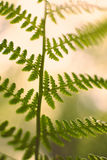 Vintage soft green fern leafs on blurred background with bokeh Stock Image