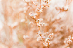 Vintage soft light tone and soft focus of abstract nature Royalty Free Stock Images
