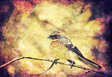 Vintage songbird background Stock Photos