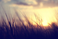 Vintage spiritual sunset field Royalty Free Stock Photography