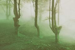 Vintage spooky forest. With fog stock photography