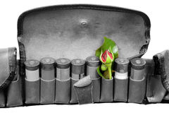 Vintage sporting cartridge belt with flower insted one shot. Very old vintage sporting cartridge belt with one flower instead shot isolated on white representing Stock Photos