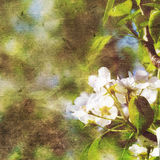 Vintage spring background. With canvas texture Royalty Free Stock Photos