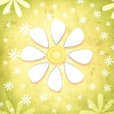 Spring white flower over vintage green background with daisy flo Royalty Free Stock Photography