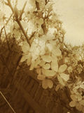 Vintage Spring Blossom Stock Images