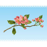 Vintage spring blossom. Vector. Royalty Free Stock Photo