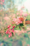 Vintage Spring flowers background Royalty Free Stock Photography