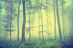 Vintage spring forest Stock Photo