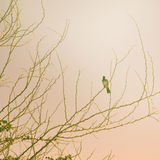Vintage spring tree with bird Stock Image