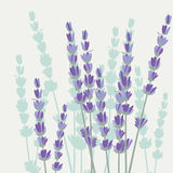 Vintage Spring Watercolor Background with Lavender Flowers Royalty Free Stock Photos