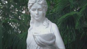 Vintage statue of a woman with a bowl under a conifer araucaria araucana