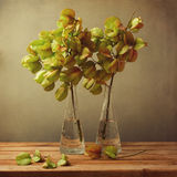 Vintage still life with autumn golden tree branches Stock Image