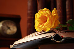 Rose On Book Stock Images