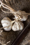 Vintage still life with garlic and knife on canvas Royalty Free Stock Image