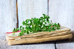 Vintage still life with kitchen herbs and cook book. Royalty Free Stock Image