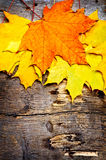 Vintage still life with orange autumn leaves Stock Images