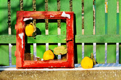 Vintage still life with red frame, yellow  quince and wooden fence Stock Image