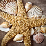 Vintage still life with seashell Royalty Free Stock Photo