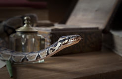 Vintage still life with snake Stock Images
