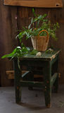 Vintage still life. With wild plants and stool stock photo
