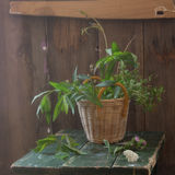 Vintage still life. With wild plants and stool stock images